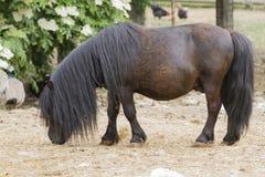 Cavallino del cavallo nell'azienda agricola Fotografia Stock Libera da Diritti
