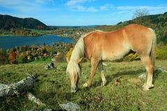 Cavallino di Shetland, località di soggiorno di salute di schliersee Immagini Stock