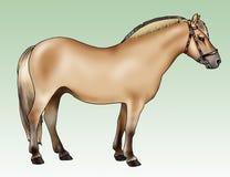 Cavallino - razza del fiordo Fotografia Stock Libera da Diritti