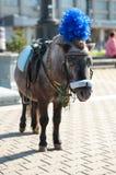 Cavallino sellato su ed aspettare Fotografie Stock Libere da Diritti