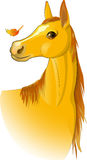 Cavallo, аutumn Fotografia Stock