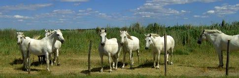 Cavallo 01 Fotografie Stock Libere da Diritti
