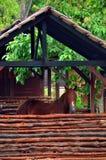 Cavallo 2 Immagine Stock Libera da Diritti