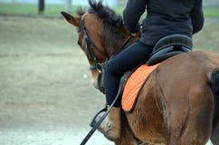 Cavallo Fotografie Stock Libere da Diritti