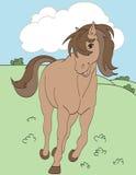 Cavallo adorabile Immagini Stock Libere da Diritti