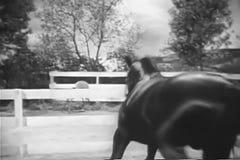 Cavallo agitato in recinto per bestiame stock footage