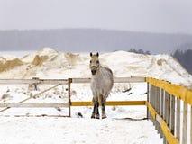 Cavallo al recintare la gabbia Fotografia Stock Libera da Diritti