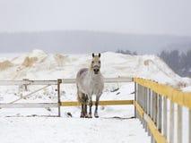 Cavallo al recintare la gabbia Fotografia Stock