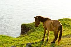 Cavallo al waterside Fotografie Stock