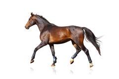 Cavallo allegro isolato sopra un bianco Fotografia Stock