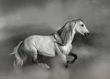 Cavallo andaluso Immagini Stock