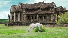 Cavallo in Angkor Wat, ritoccato avanzato, sostituzione del cielo, potenziamento di colore video d archivio
