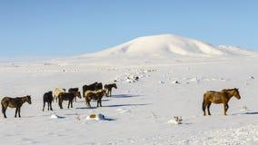 Cavallo Ani Ruins Winter (stagione 4) immagini stock libere da diritti