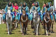 Cavallo arabo Immagini Stock Libere da Diritti