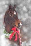 Cavallo arabo con una corona di Natale Fotografia Stock Libera da Diritti