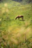Cavallo in azienda agricola ad ovest di Sydney Fotografia Stock Libera da Diritti