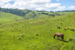 Cavallo in azienda agricola ad ovest di Sydney Immagine Stock