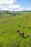 Cavallo in azienda agricola ad ovest di Sydney Immagine Stock Libera da Diritti
