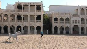 Cavallo bianco arabo archivi video