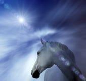 Cavallo bianco astratto Fotografia Stock Libera da Diritti