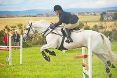 Cavallo bianco che salta all'esposizione di Nairn Immagine Stock Libera da Diritti