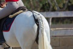 Cavallo bianco di guida dell'uomo con una treccia sulla coda di cavallo al Ridin immagini stock libere da diritti