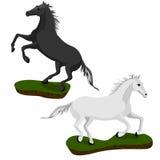 Cavallo bianco e nero Fotografia Stock Libera da Diritti