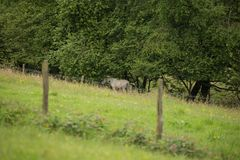 Cavallo bianco nella foresta Fotografia Stock