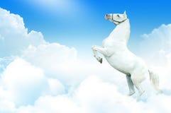 Cavallo bianco nelle nubi fotografia stock