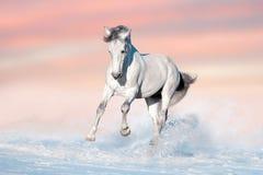 Cavallo bianco in neve fotografia stock