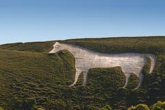 Cavallo bianco sulla fortificazione della collina Immagine Stock Libera da Diritti