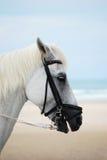 Cavallo bianco sulla spiaggia Immagini Stock
