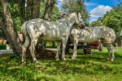 Cavallo bianco in una parte anteriore di un cottage tradizionale Fotografie Stock