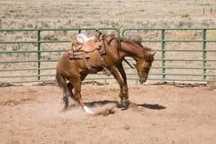 Cavallo Bucking Fotografie Stock Libere da Diritti
