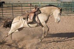 cavallo bucking Fotografie Stock