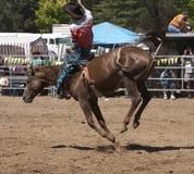 Cavallo Bucking Immagine Stock Libera da Diritti