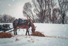 Cavallo in cablaggio Fotografia Stock Libera da Diritti