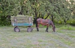 Cavallo in cablaggio fotografia stock