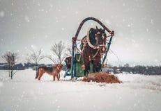 Cavallo in cablaggio con il cane rosso Fotografia Stock Libera da Diritti