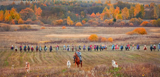 Cavallo-caccia Immagini Stock Libere da Diritti