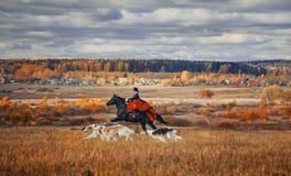 Cavallo-caccia con i cavalieri nell'abitudine di guida immagini stock