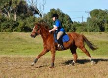 Cavallo Cantering del paese trasversale Fotografie Stock