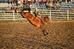 A cavallo cavaliere fantastico Fotografie Stock