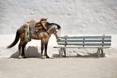 Cavallo che attende sulla via vicino al banco Fotografie Stock