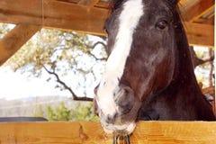 Cavallo che esamina granaio Immagini Stock Libere da Diritti