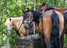 Cavallo che esamina la macchina fotografica, backview immagini stock libere da diritti