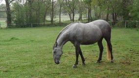 Cavallo che guarda fisso nel prato archivi video