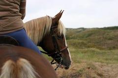 Cavallo che guarda indietro Immagini Stock Libere da Diritti