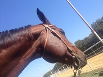 Cavallo che guarda l'arena fotografia stock libera da diritti