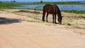 Cavallo che mangia erba archivi video